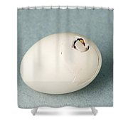 Hatching Chicken Shower Curtain