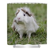 Have You Seen My Hairspray? Shower Curtain