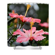 Hawaiian Pink Hibiscus Shower Curtain