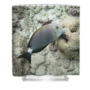 Hawaiian Tropical Fish P1060093 Shower Curtain