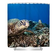 Hawaiian Turtle On Pacific Reef Shower Curtain by Dave Fleetham