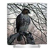 Hawk 6 Shower Curtain