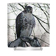 Hawk 9 Shower Curtain