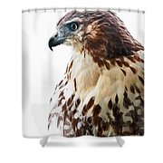Hawk Majesty Shower Curtain