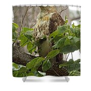 Hawk On Watch Shower Curtain
