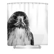 Hawk On White Background Shower Curtain