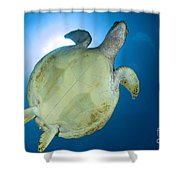 Hawksbill Sea Turtle Belly, Australia Shower Curtain