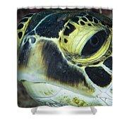 Hawksbill Sea Turtle Portrait Shower Curtain