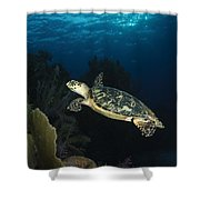 Hawksbill Sea Turtle Swimming Shower Curtain