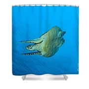 Hawksbill Turtle In The Diving Shower Curtain