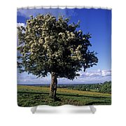 Hawthorn Tree On A Landscape, Ireland Shower Curtain