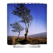 Hawthorn Trees In Sally Gap, County Shower Curtain