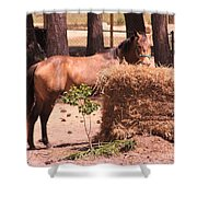 Hay's For Horses Shower Curtain