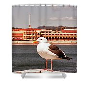 hd 384 hdr - Lone Seagull Shower Curtain