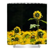 Head And Shoulders Above The Rest Shower Curtain