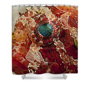Head Detail Of A Red Dwarf Lionfish Shower Curtain