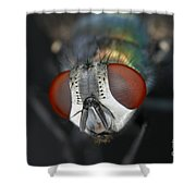 Head Of A Green Blow Fly Shower Curtain