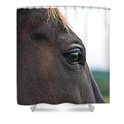 Head Of A Wild Horse In The Wilderness Shower Curtain