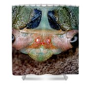 Head Of Cicada Shower Curtain