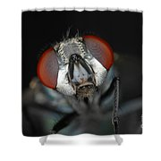 Head Of Green Blow Fly Shower Curtain