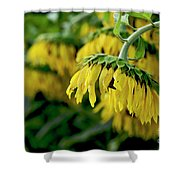 Head Of Sunflowers Shower Curtain