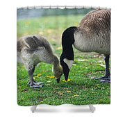 Head To Head Shower Curtain