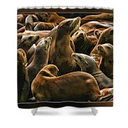 Heads Above The Rest Shower Curtain