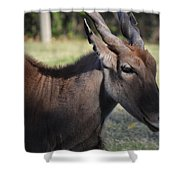 Headshot Eland Shower Curtain