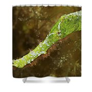 Headshot Of A Green Helimeda Ghost Shower Curtain