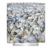 Healing Garden Shower Curtain by Ivy Ho