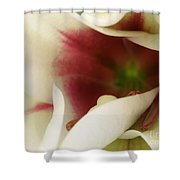 Heart Of A Lily Shower Curtain