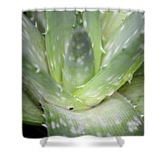 Heart Of An Aloe Shower Curtain