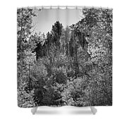 Heart Of The Aspen Forest Shower Curtain
