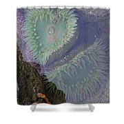 Heart Of The Tide Pool Shower Curtain