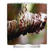 Heart Pine Limb Shower Curtain