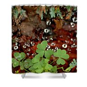 Heart Shaped Clover And  Dew Drops Shower Curtain