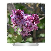 Heart Shaped Lilac Shower Curtain