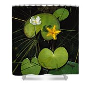 Heart-shaped Water Lily Shower Curtain