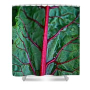 Heart Wise Shower Curtain