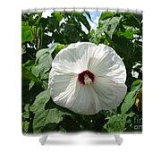 Hearty Hibiscus Shower Curtain