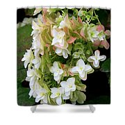 Heavenly Hydrangea Shower Curtain
