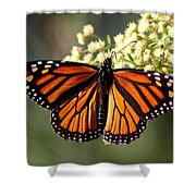 Heavenly Wings Shower Curtain
