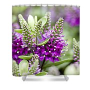 Hebe Hebe Sp Dona Diana Variety Flowers Shower Curtain