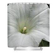 Hedge Morning Glory Shower Curtain