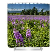 Hedge Woundwort Flower Blossoms And Field Shower Curtain
