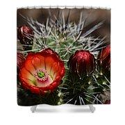 Hedgehog Cactus Flowers  Shower Curtain