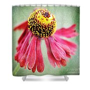 Helenium Flower 2 Shower Curtain