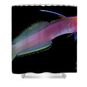 Helfreiky Firefish Shower Curtain