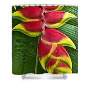 Heliconia Rostrata II Shower Curtain