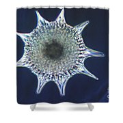 Heliodiscus Sp. Radiolarian Lm Shower Curtain